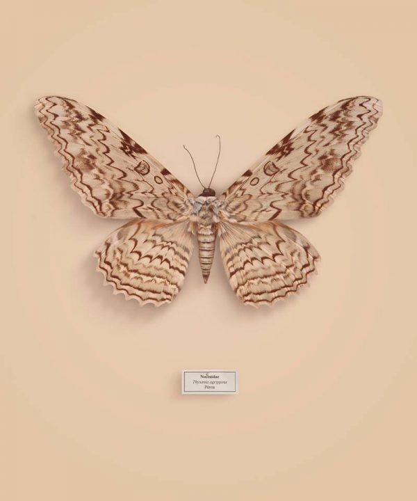 vb-papillon3