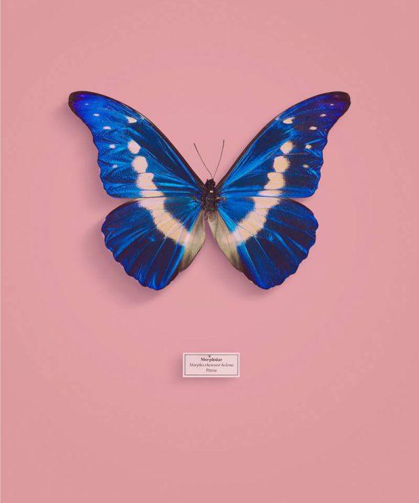 vb-papillon5